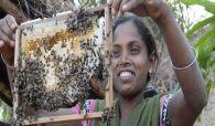 bee-hive