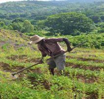 field-worker