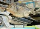piranha