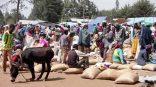village-donkey-sandbags
